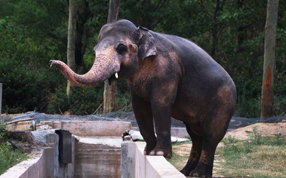 'El elefante más solitario del mundo' finalmente será rescatado de zoológico
