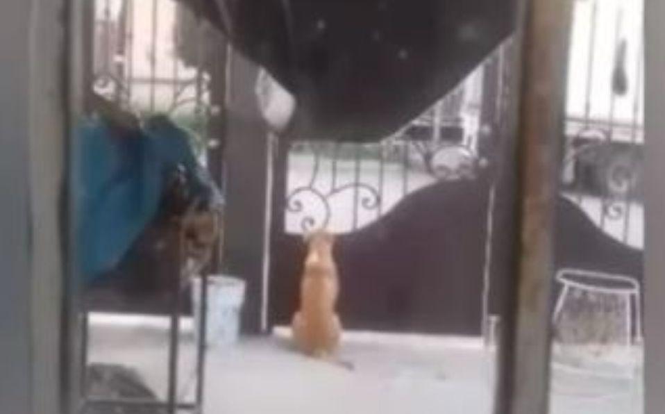 Perrito que vive junto a una escuela espera a los niños desde hace meses