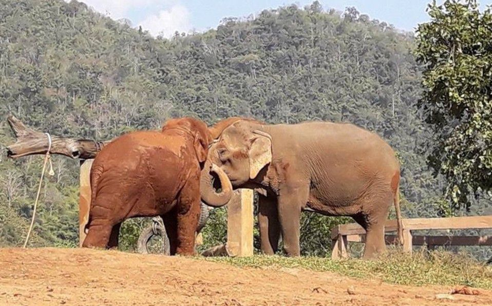 Elefante llora