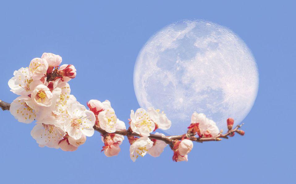 Esto debes de saber de la Superluna de Flores 2021 (Getty).