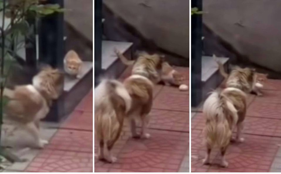 La dueña filmó la acción de su mascota (Captura de pantalla).