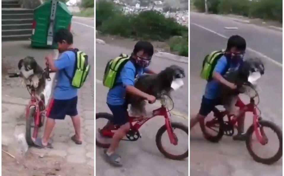 Niño pone cubrebocas a su perro para cuidarlo del coronavirus (Captura de pantalla).