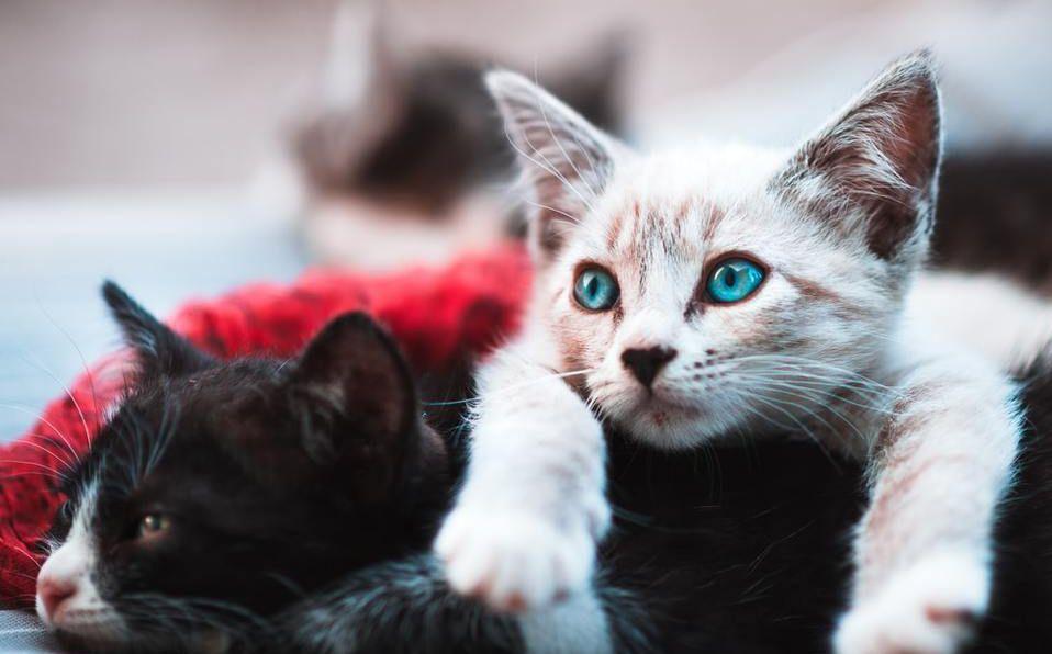La reacción de los gatitos al ser acariciados con un cepillo de dientes húmedo