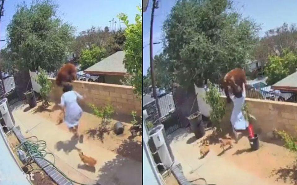 La joven corrió al ver que atacaban a sus perros (Captura de pantalla).