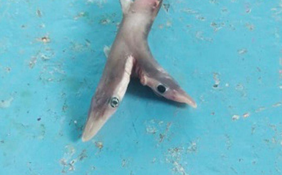 El tiburón fue regresado al mar tras las fotografías (Twitter).