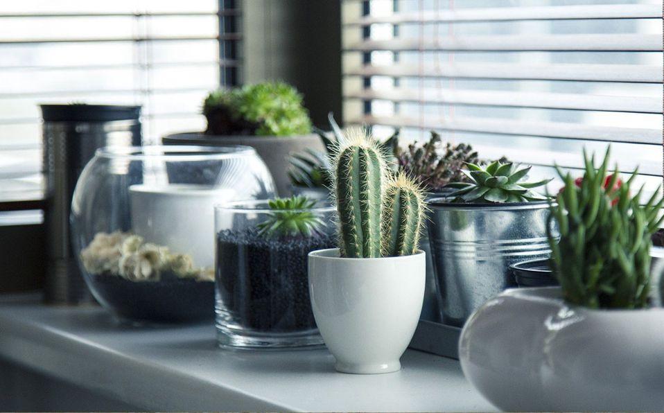 Decoración con plantas para departamentos pequeños