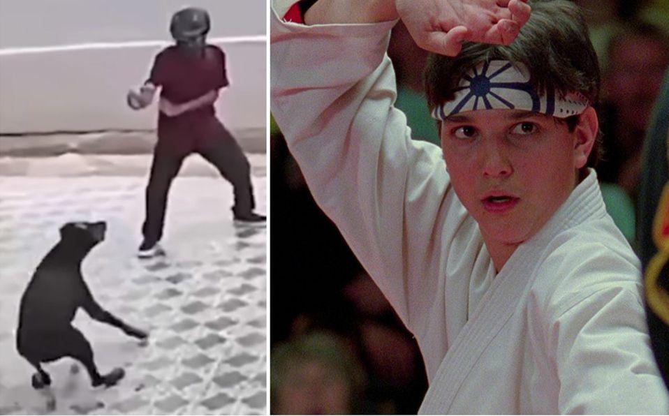 Usuarios de redes sociales compararon al joven con Daniel LaRusso (Captura de pantalla).